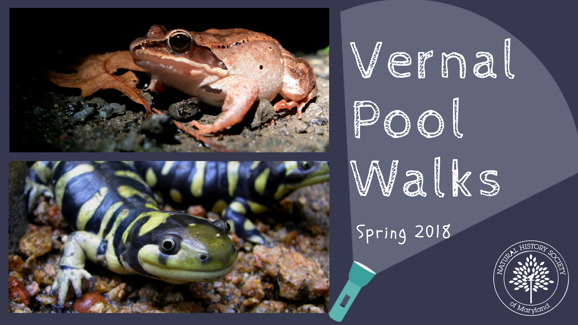 Join us at a vernal pool in northern Baltimore County! We will spend the  evening searching for critters that leave their comfortable winter hideouts  to ... 6ef0c382c